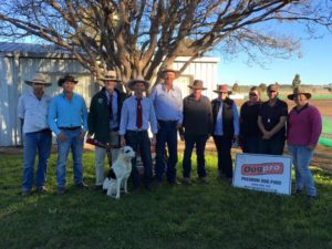 Some of the placing competitors at the Allora Championships trial